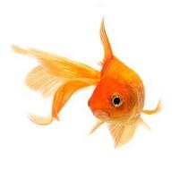 pesciolino-rosso-1
